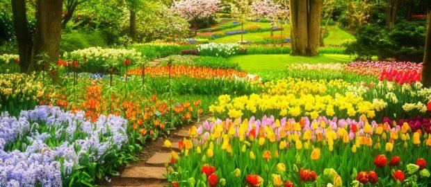 Profi, kertészkedéssel foglalkozó céggel léphet kapcsolatba.